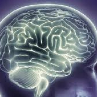 The brain health & memory Cover Up