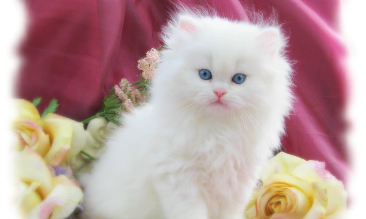 Lovely Cats Images Hd Wallpaper Download Free English India