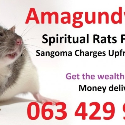 To improve your performance with spiritual rats and money spells +27634299958 sweden